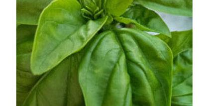 Urban Harvest Basil Seeds