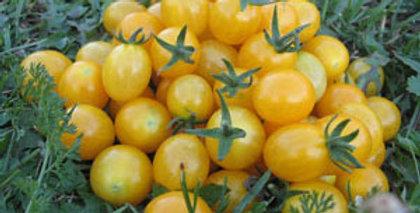 Urban Harvest Cherry Tomato Seeds