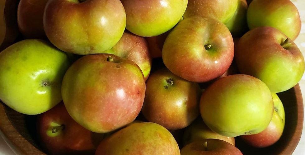 Harmony Garden Heirloom Apples