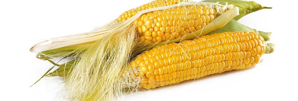 Urban Harvest Corn Seeds