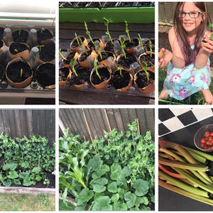 Congregations gets growing for ECO churc