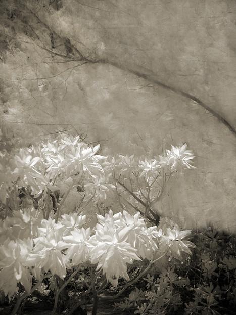 Soft Plants
