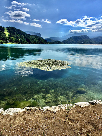 Lake Bled in Color