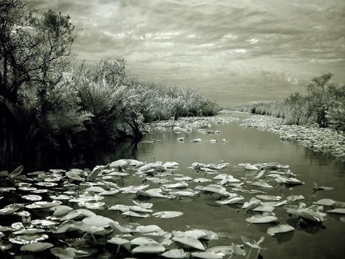 Everglades Frozen Dreams