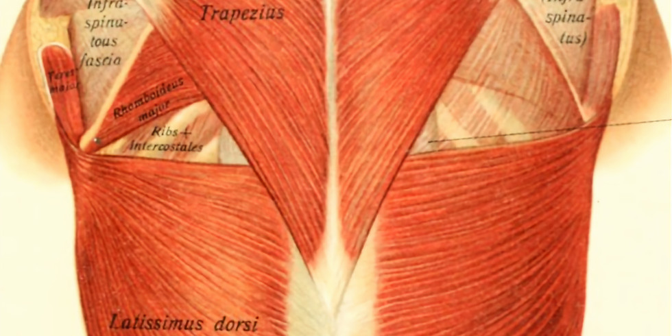 Fascia: The Mystery Wrap
