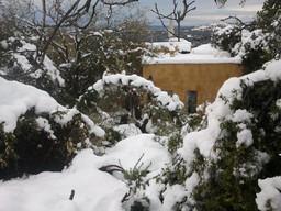 שלג נמס על העצים