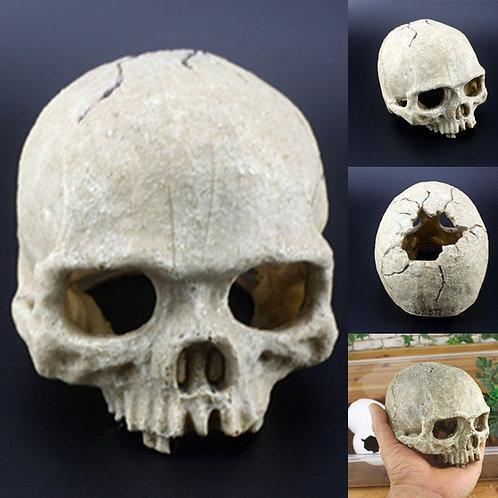 Skull Reptile Decoration