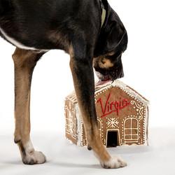 Virgin Hotels - Pent Up