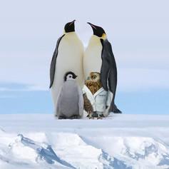 TA_Dec_Antarctica.jpg