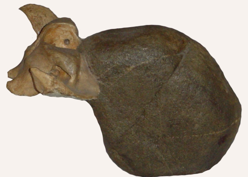 Muflon Piedra