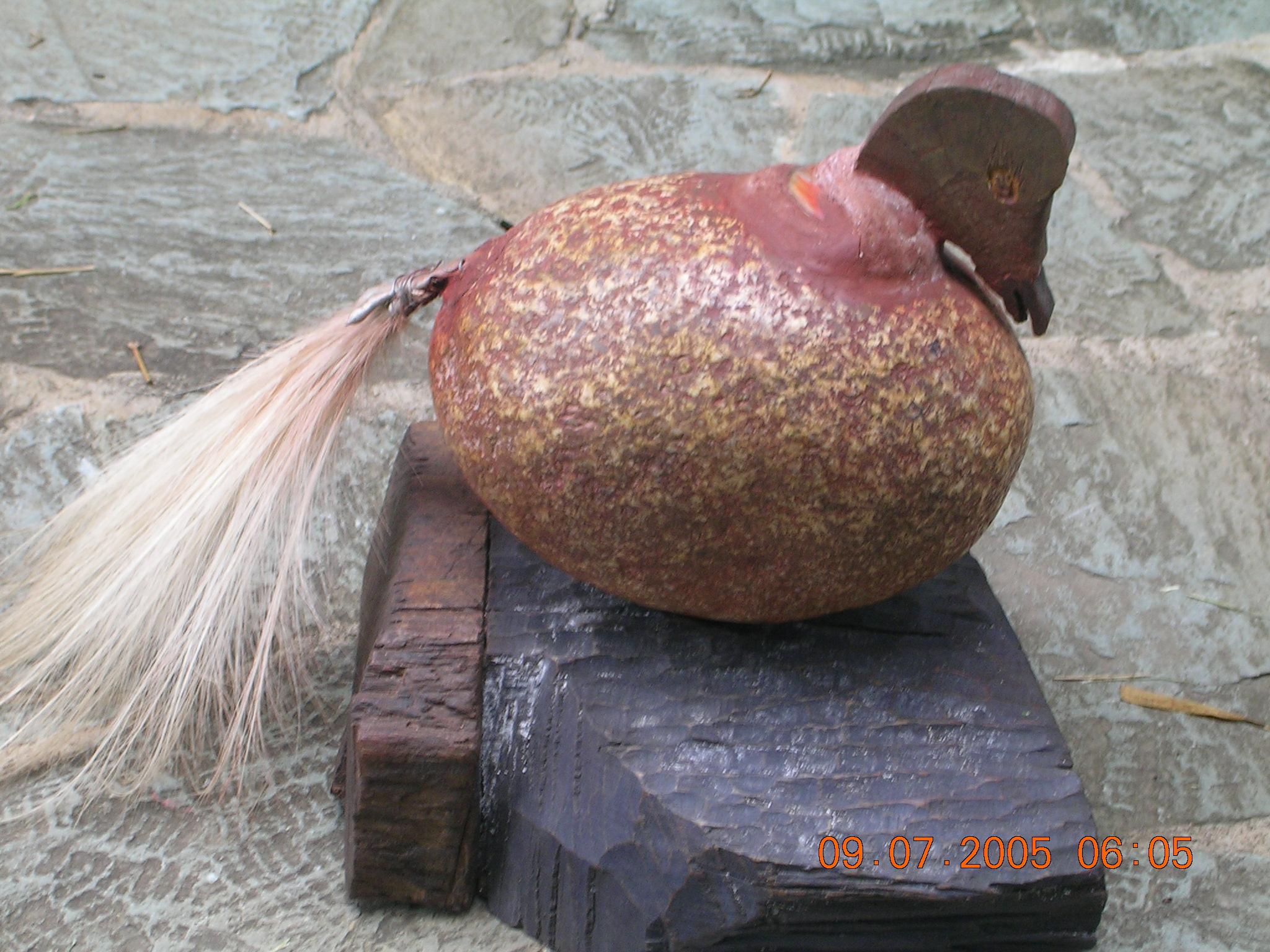Pato-Patica