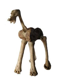 Caballo Prehistorico