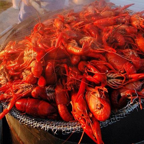 Live Louisiana Crawfish