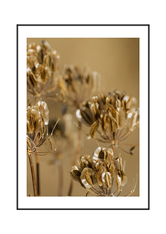 Dry Flowers Poster