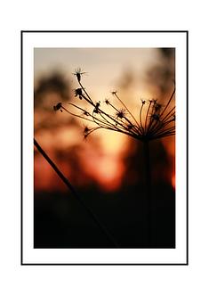Nordic Sunset II
