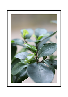 Green Plant Poster