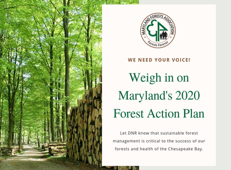 MFA's Position: Maryland's 2020 Forest Action Plan
