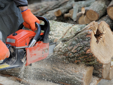 Chainsaw Safety & Maintenance Workshop