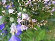 insektensterben6-1024x768.jpg