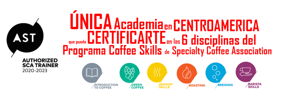 Certificaciones Internacionales en cafe, ceritificacion de cafe, cafe certificado, introduccion al cafe, green coffee, cafe verde, sensory skills, catacion, tostaduria, roasting, brewing, barista skills, entrenadores autorizados de sca, specialty coffee association, academia en centroamerica, certificarte, programa coffee skills