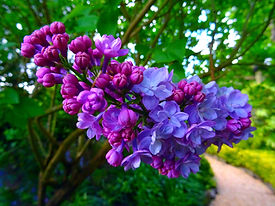 bloom-blooming-blossom-blur-395044.jpg