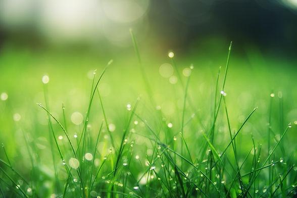 closeup-photo-of-green-grass-field-14236