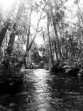 creek_edited_edited.jpg