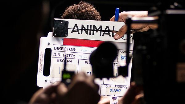 Animal filmando v2.jpg