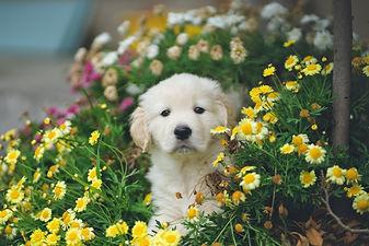 Puppy Flowers.jpg
