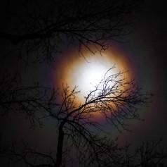 full moon bows 3