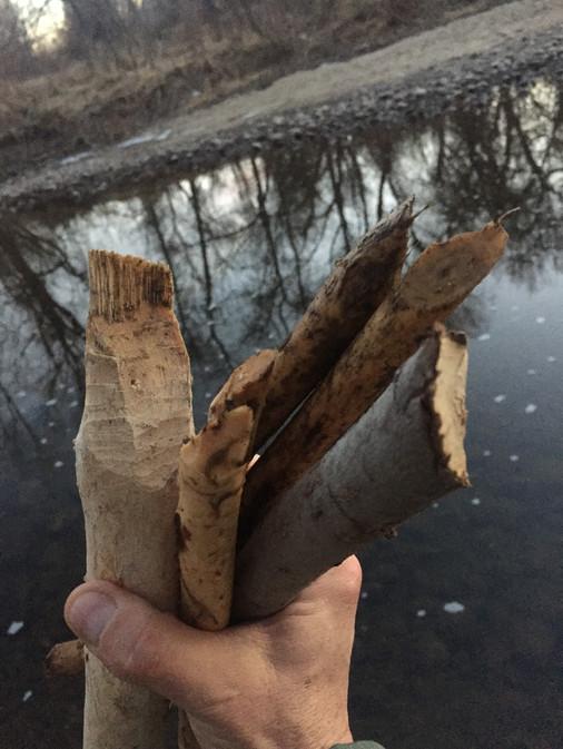 beaver medicine Poudre river