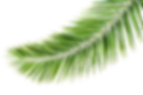 palm-leaves-picture.png