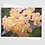 Thumbnail: Scent of Flowers #1 | 5 Card Set