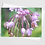 Thumbnail: Scent of Flowers #2   5 Card Set
