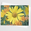 Thumbnail: Scent of Flowers #1   5 Card Set