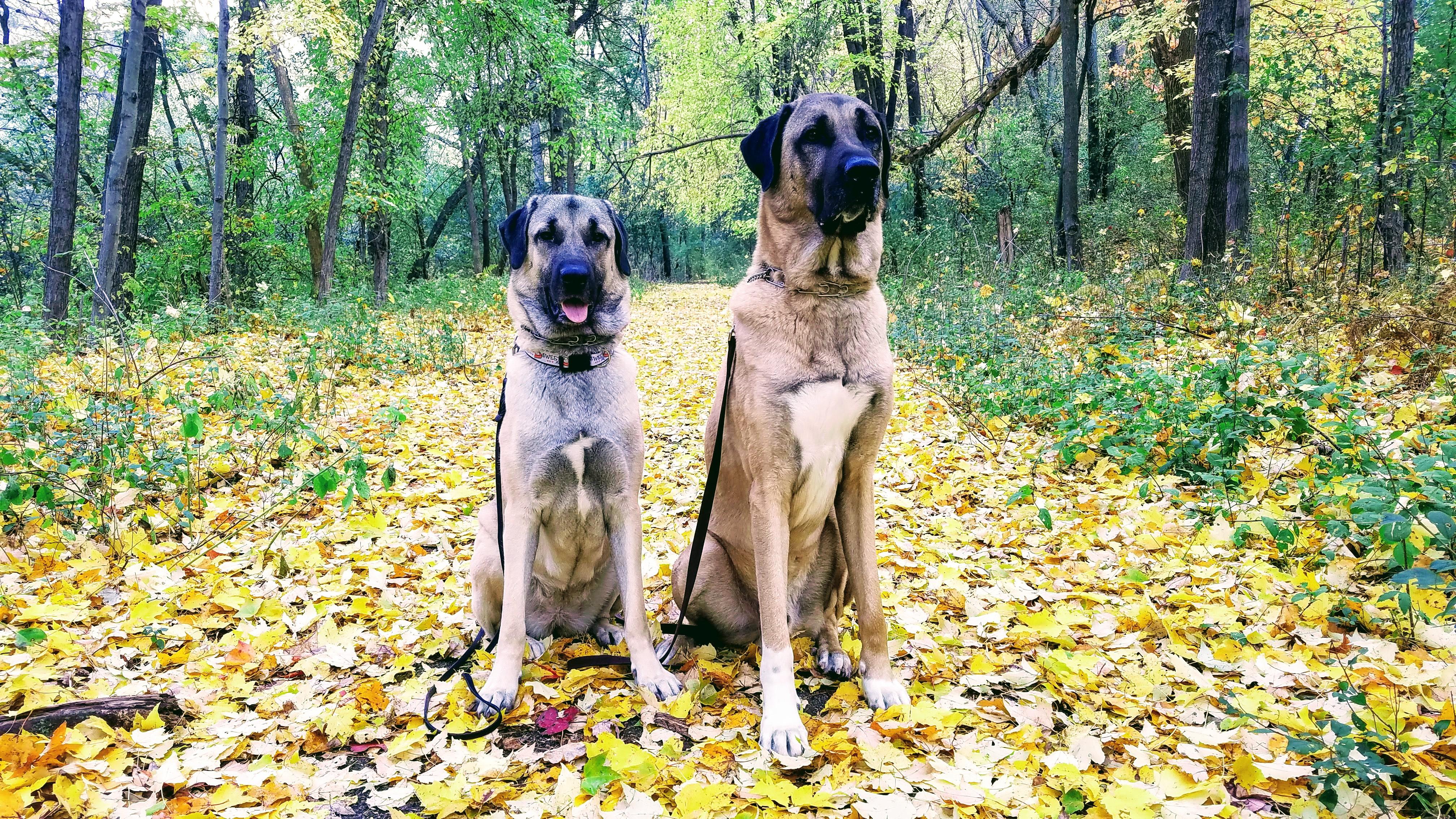 Aslan & Eylul