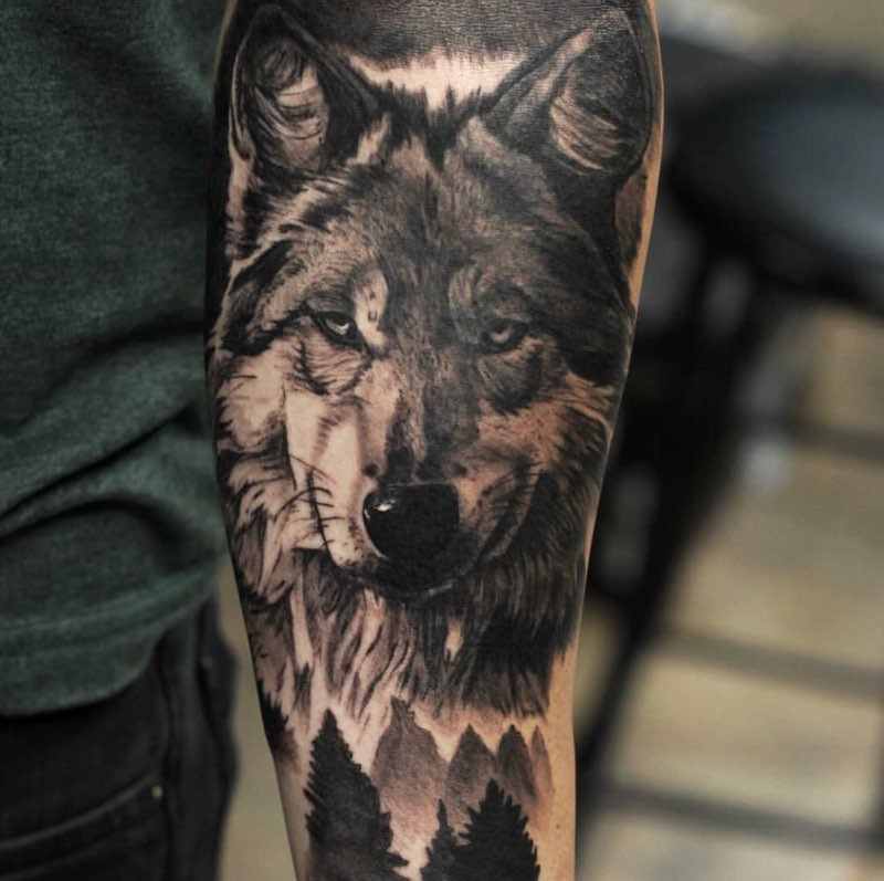 wolf by andrew