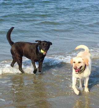 Charlie and Lily Staed at beach