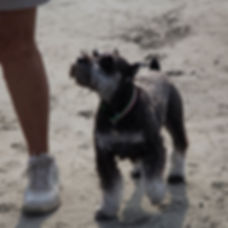 DogPic3.jpg