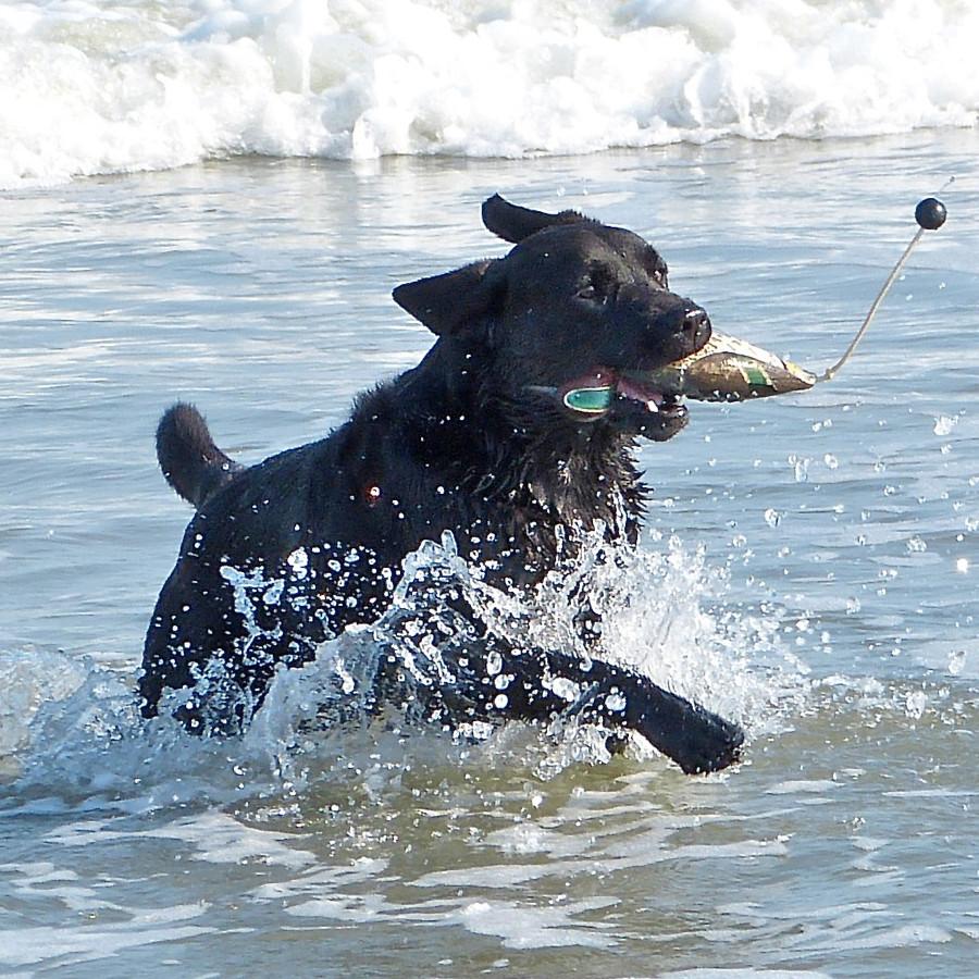 DogPic5.jpg