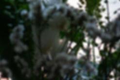 dlarose-_MG_9750.jpg