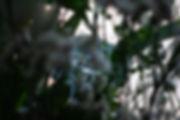 dlarose-_MG_9747.jpg