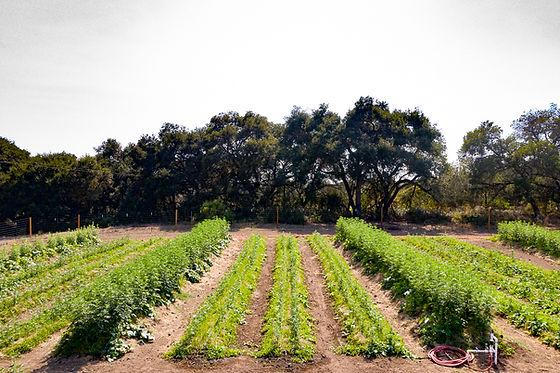 Bird Valley Organics Regenerative Hügelkultur Farm