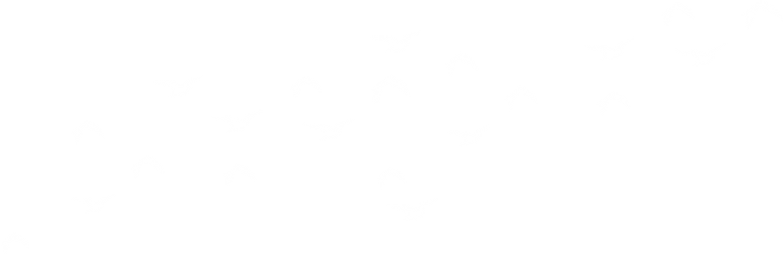Bird Valley Organics is a regenerative hügelkultur farm