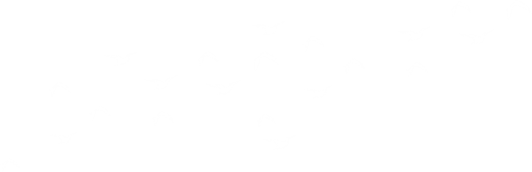 Birds graphic.png