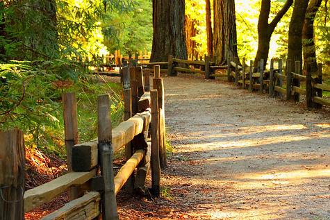 wood-3044473_1920.jpg