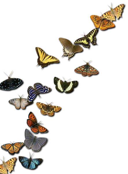 insects-2414736_1920.png