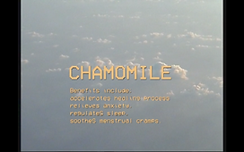 Chamomile S4.png