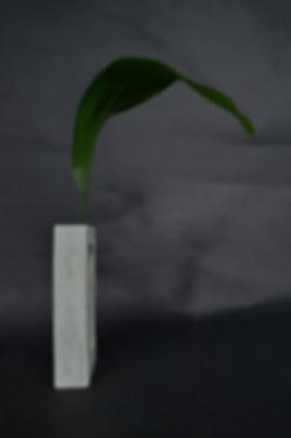 Quado matching Aspidistra, Aspidistra elatior, Aspidistra yingjiangensis, Aspidistra nikolaii, Nolinoideae, home design, home decor