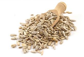 Oil Seed Short.jpg